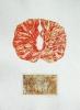 Transcendental Fire  |  2007  |  50x34cm  |  etching, chine collé  |  ed.10